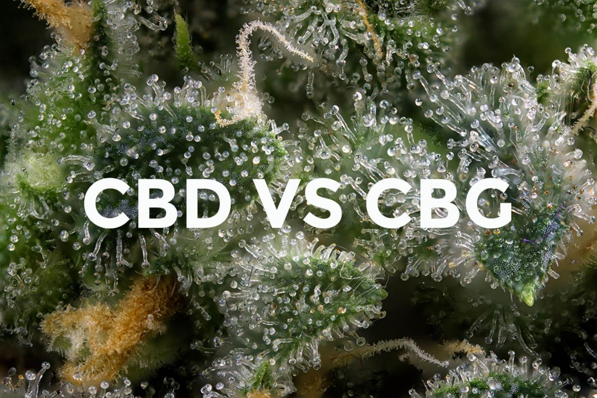 CBG vs CBD: These Are the Key Differences to Know